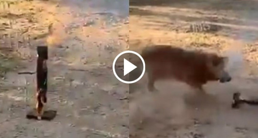 "La ""venganza"" de un perro contra la pirotecnia"