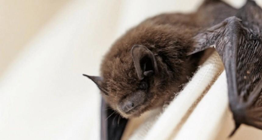 Recomendaciones ante la presencia de murciélagos