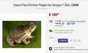 Viveza Criolla: Venden sapos en Internet para combatir el dengue