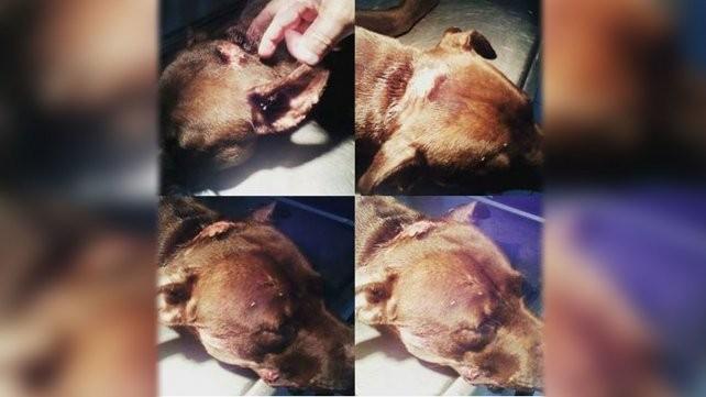 Otro caso de maltrato animal conmueve a Santa Fe