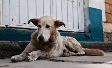 Proponen descuentos en TGI para quienes adopten perros callejeros