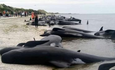 416 ballenas murieron encalladas en una playa de Nueva Zelanda