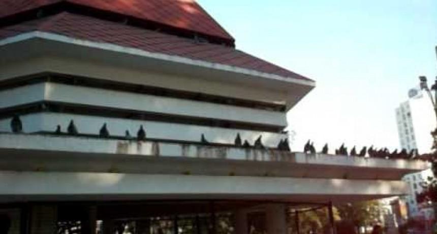 Piojos, parásitos y casos de viruela aviar en las palomas de plaza Colón