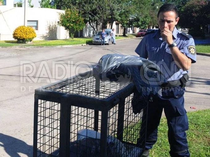 Hallan un bebé muerto dentro de una bolsa de basura