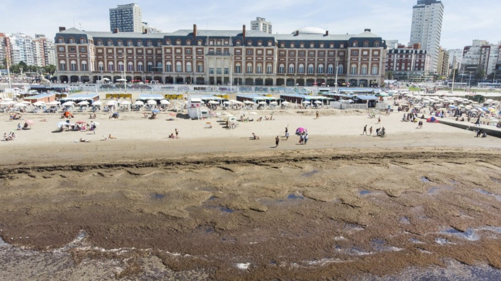 Mar del Plata se llenó de algas en el cierre del fin de semana largo