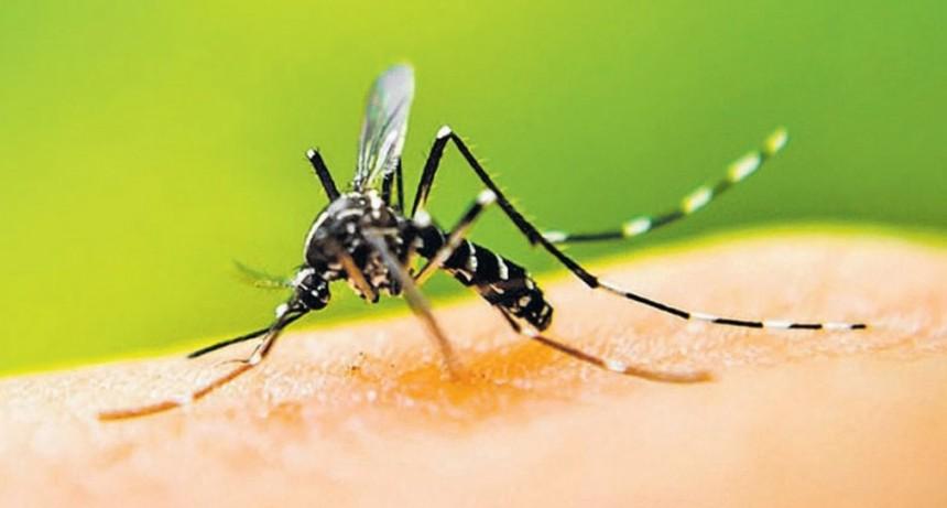 Provincias toman medidas contra el dengue