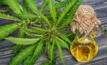 El Gobierno promulgó la ley de cannabis medicinal