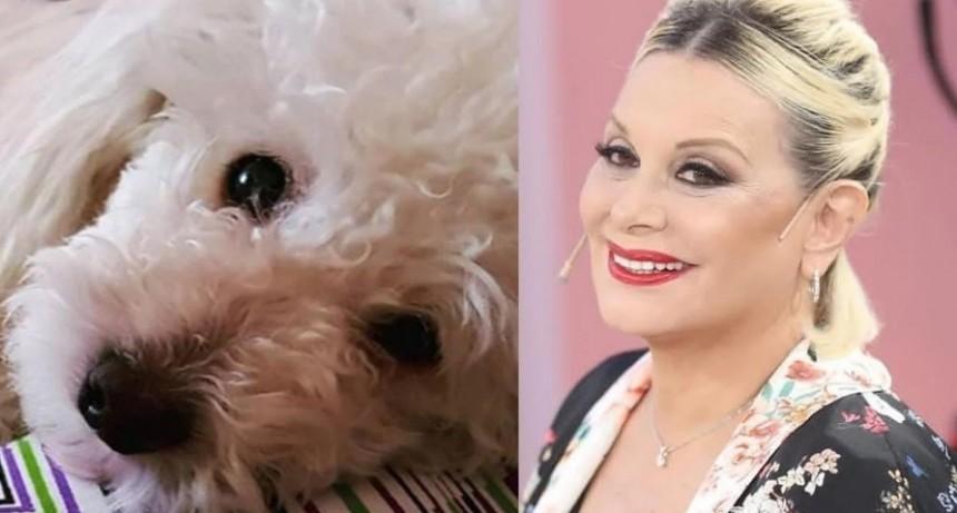 Carmen Barbieri, acusada de maltrato animal por cambiarle el look a su perro