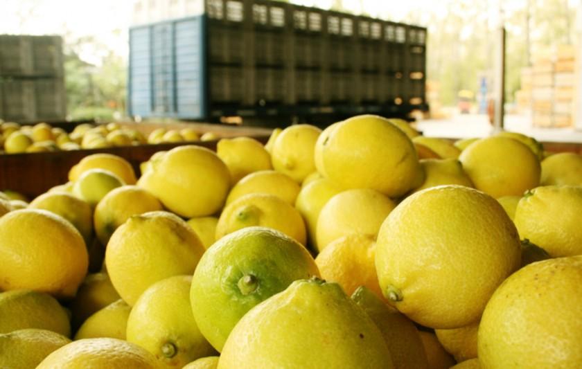 Estados Unidos permite la importación de limones argentinos