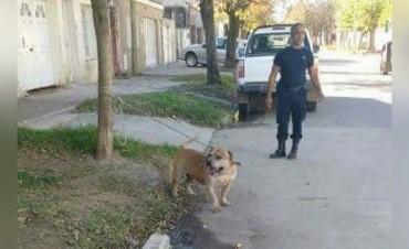 Un hombre terminó en el Cullen tras ser mordido por un perro