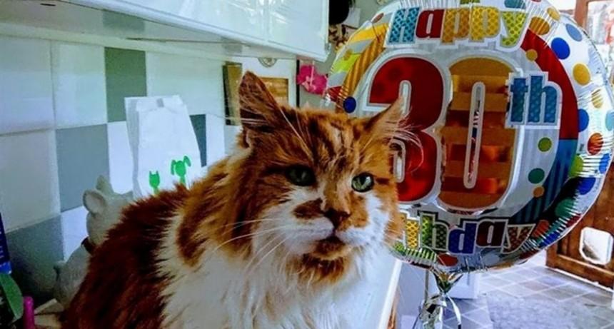 El gato más viejo del mundo celebró sus 30 años