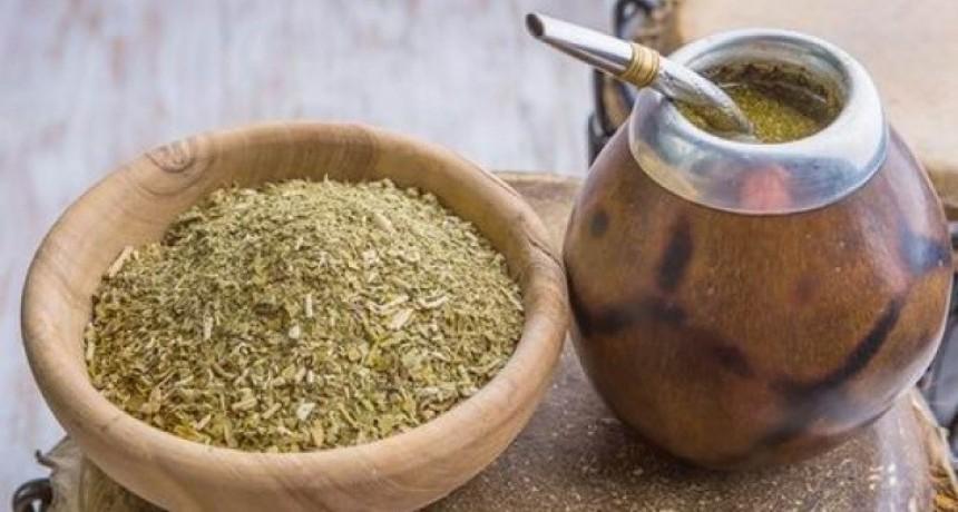 En Uruguay venderán yerba mate con cannabis