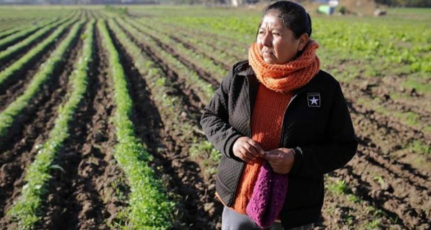 Alimentos naturales y a precio justo: así funciona el Mercado Santafesino