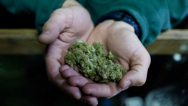 Las farmacias uruguayas comenzarán a vender marihuana