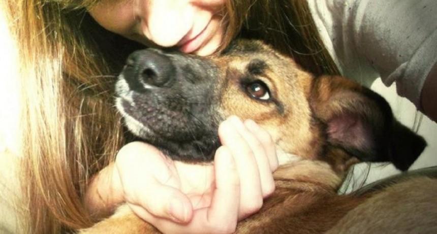 Según un estudio, acariciar a perros y gatos alivia el estrés