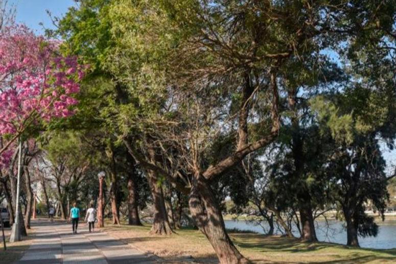 La Municipalidad trasplantará árboles adultos
