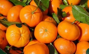 Niña muerta luego de comer una mandarina