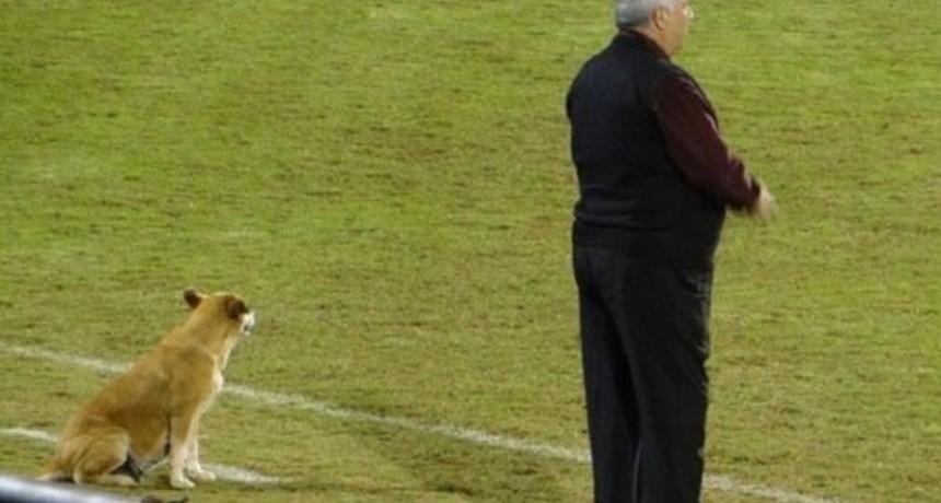 Una perra, asistente en Paraguay