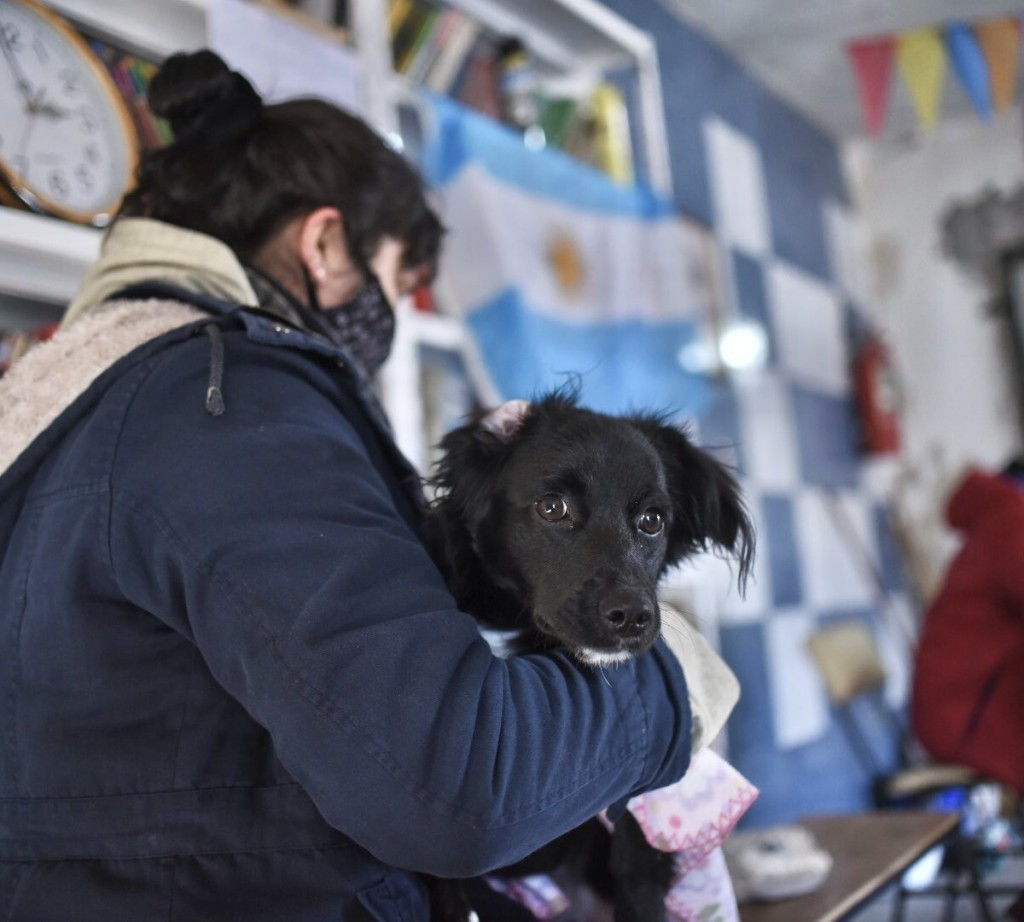 Continúa el cronograma de castración y vacunación para animales de compañía