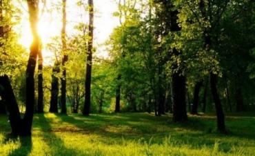 Santa Fe perdió el 82% de sus bosques nativos.