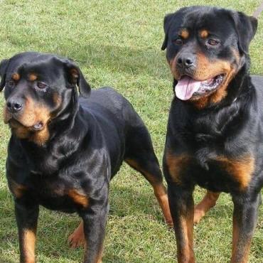 En Santo Tomé buscan regularizar la tenencia de perros