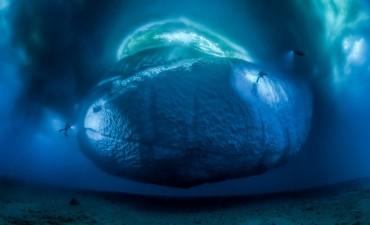 Las impresionantes imágenes del concurso anual de fotografía sobre vida silvestre