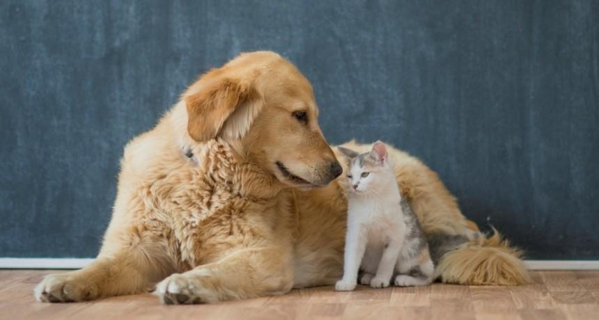 La adicción de las personas al celular puede generar depresión en las mascotas