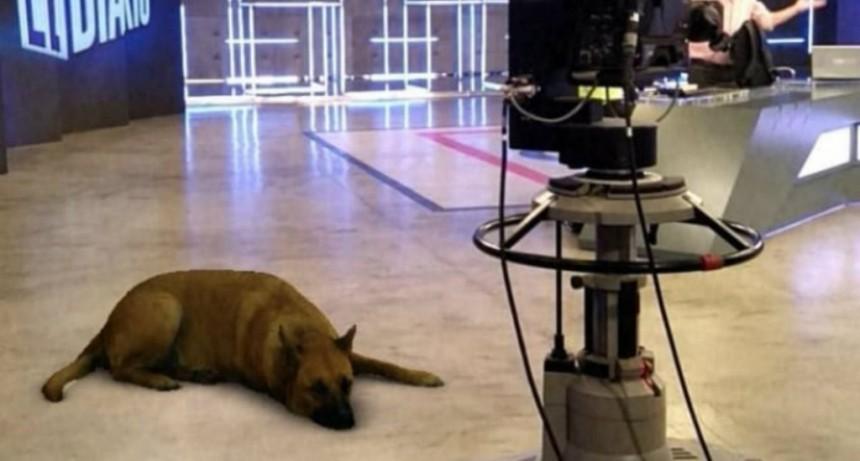 Sasha dog: el filtro de Instagram que divierte y enfurece por partes iguales