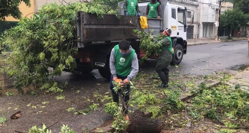 Informe sobre la recolección de ramas y reparación de postes