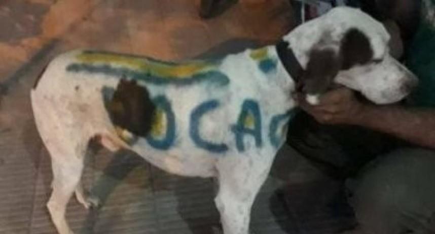 Un carnicero pintó a su perro con los colores de Boca